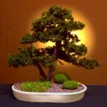 Preserved Juniper Bonsai Tree – Upright Double Trunk Style (Preserved – Not a living tree)