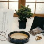 Starter Kit – Juniper Procumbens Make Your Own Bonsai Tree
