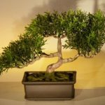 Artificial Japanese Tea Leaf Bonsai Tree
