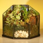 Open Terrarium Indoor Foliage Arrangement