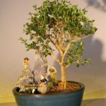 Flowering Mount Fuji Serissa Bonsai Tree – Medium Stone Landscape Scene (serissa foetida)