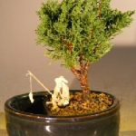 Shimpaku Bonsai Tree Water/Land Container – Small (shimpaku itoigawa)